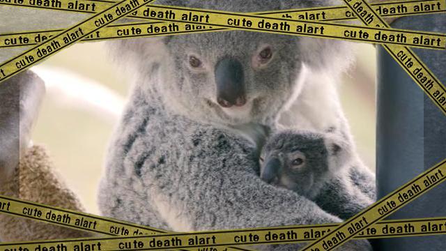 koala3-frame