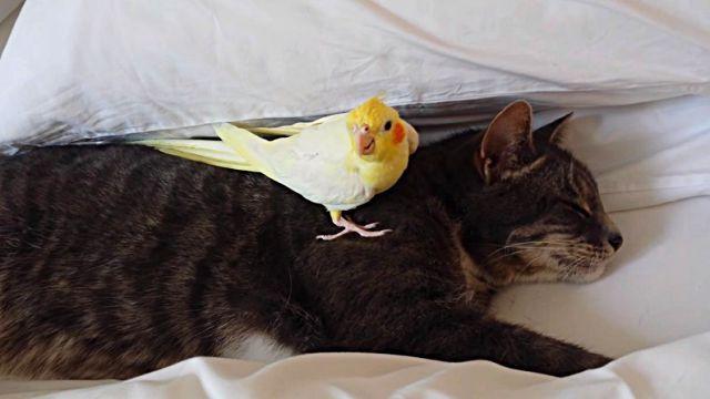 birdprotectingcat2