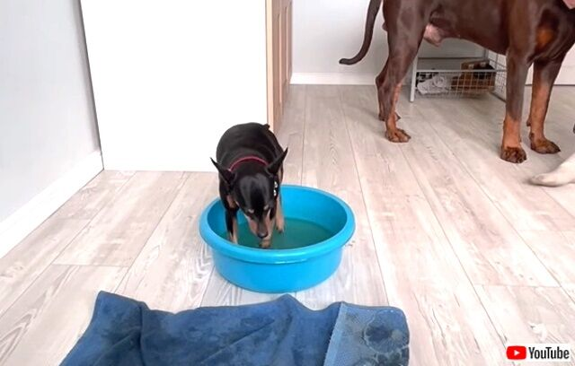 pawsclean2_640