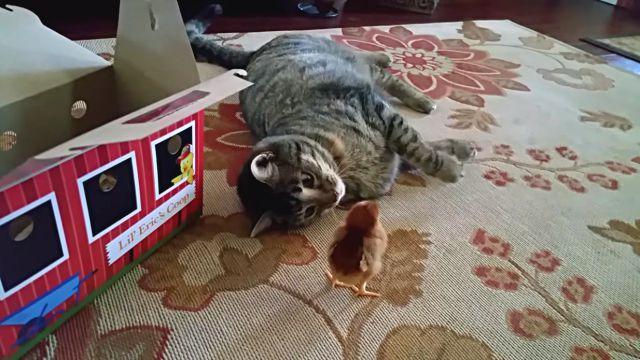 catnchick0