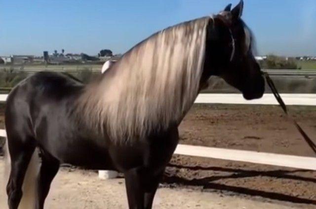 funnyhorses5_e