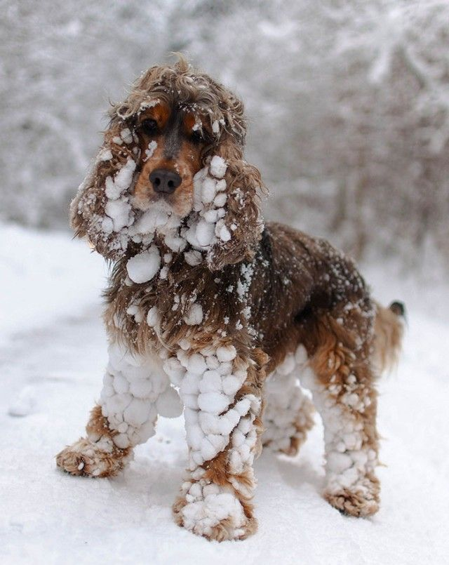 funny-animals-first-snow-cats-dogs22_e