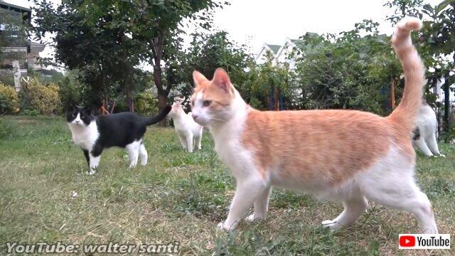 鶏と猫を集める魔法の言葉?「ご飯ニャ!」と、一斉に走ってくるトルコの居候猫たち