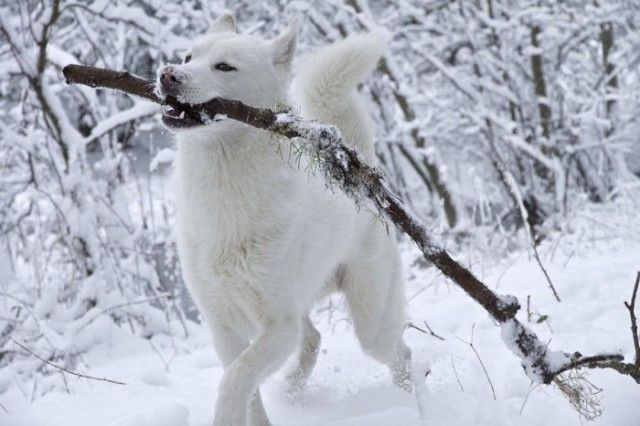 funny-animals-first-snow-cats-dogs33_e