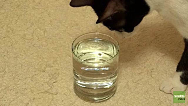 catnbubble1