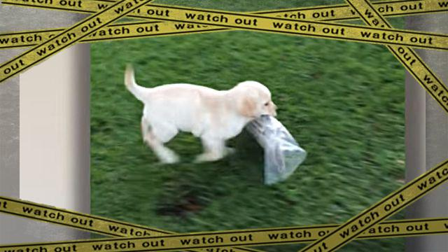 newspaperpuppy-frame