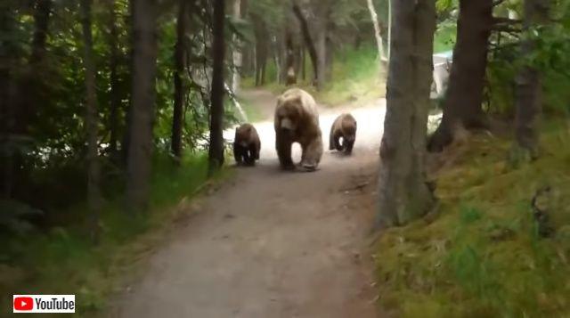 bearncubs5_640