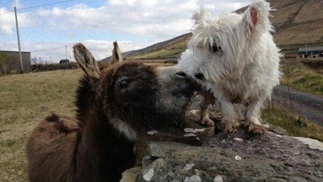 donkey-2_e