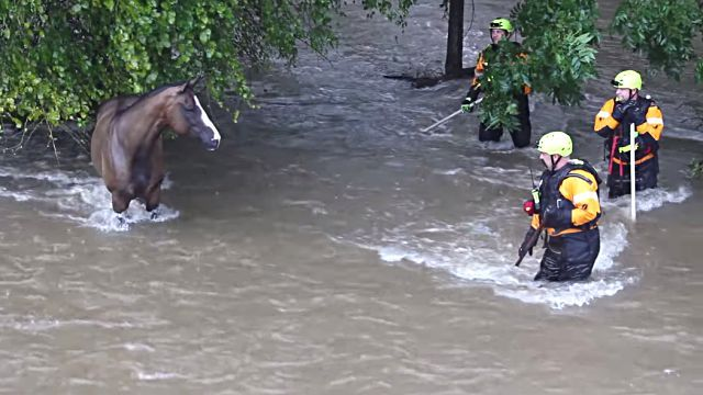 floodhorse3
