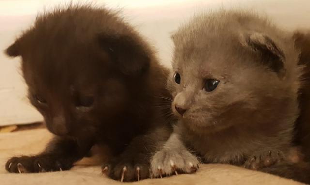 cat-8 [www.imagesplitter.net]