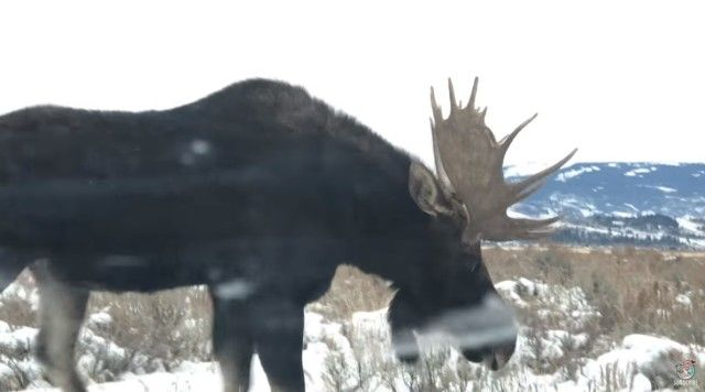moose4_e