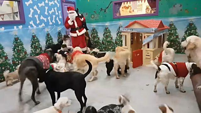 santadogs1
