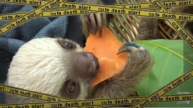 sloth-f [www-frame