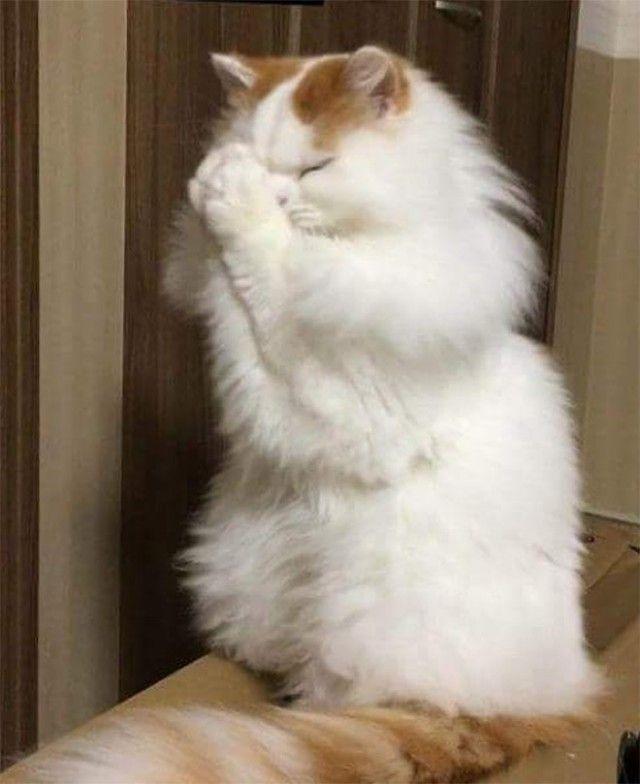 prayingcat8_e