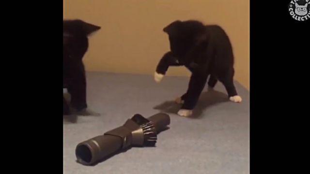 adorablecats5