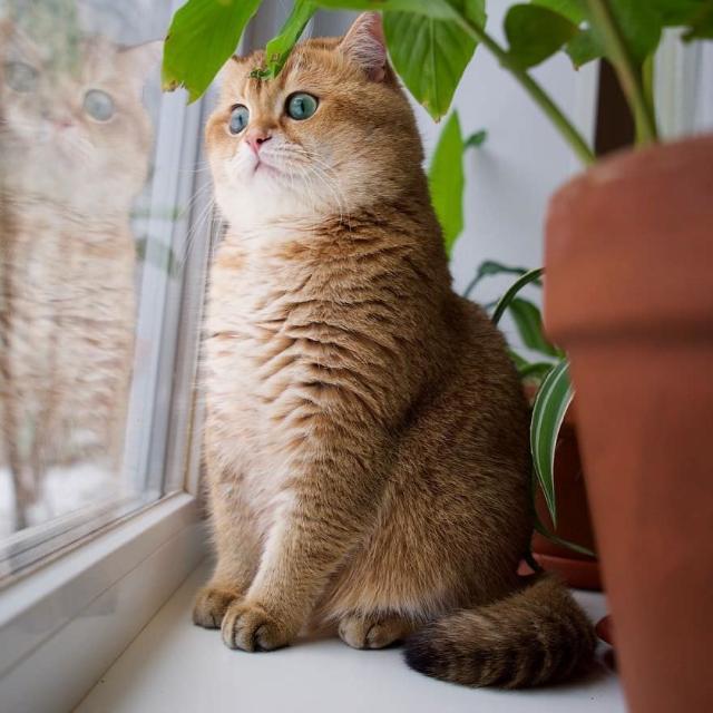 cat-6 [www.imagesplitter.net]