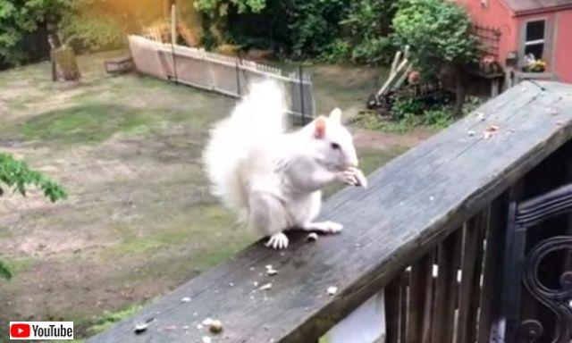albinosquirrel0_640