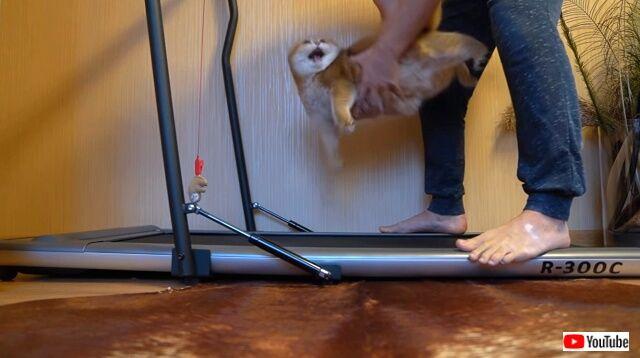 treadmill4_640