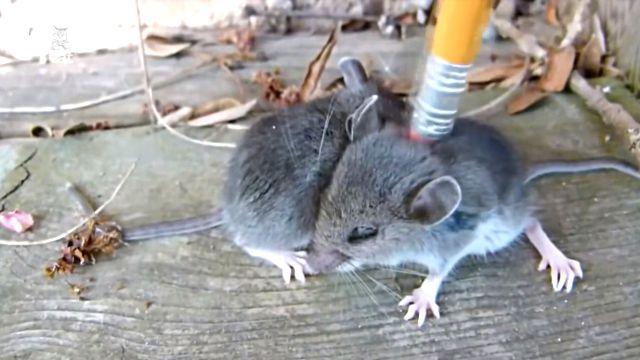 mousecute
