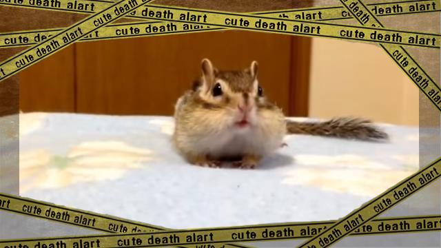 chipmunk-f [www-frame