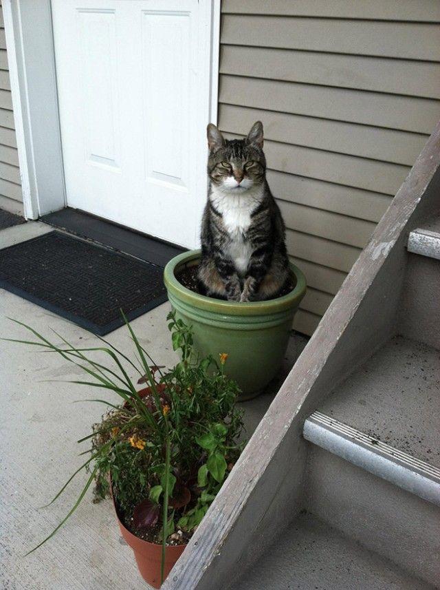 cat-plant9_e