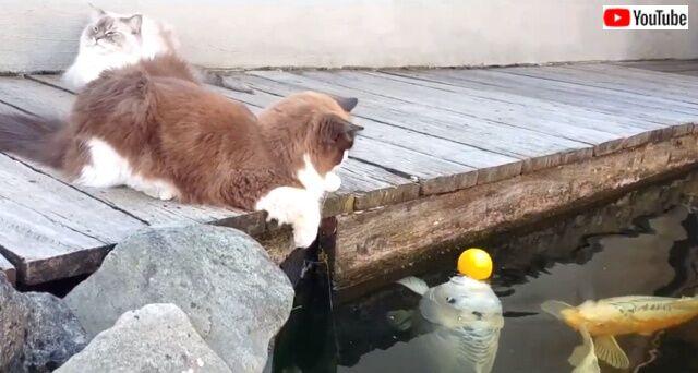 catsnfish0_640