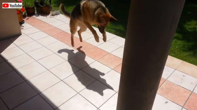 dognshadow1_640_e_640