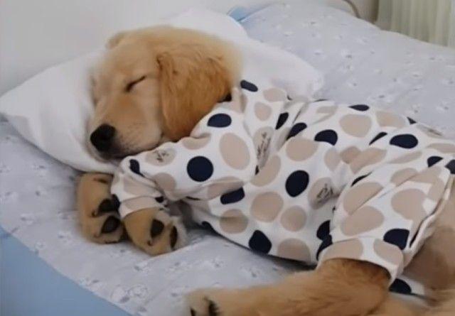 sleepingpuppy2_e