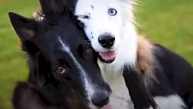 huggingdogs5