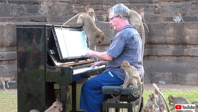 piano4macaques3_640