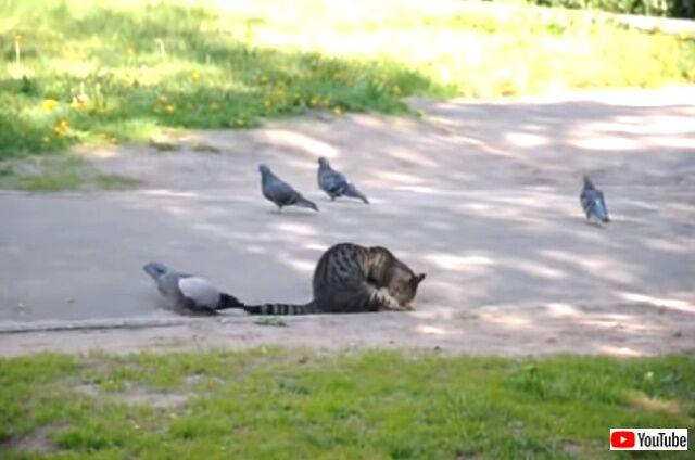 catnbird6_640