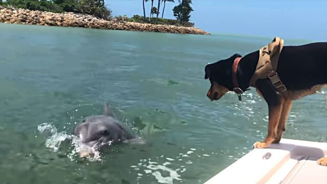 dogndolphin1