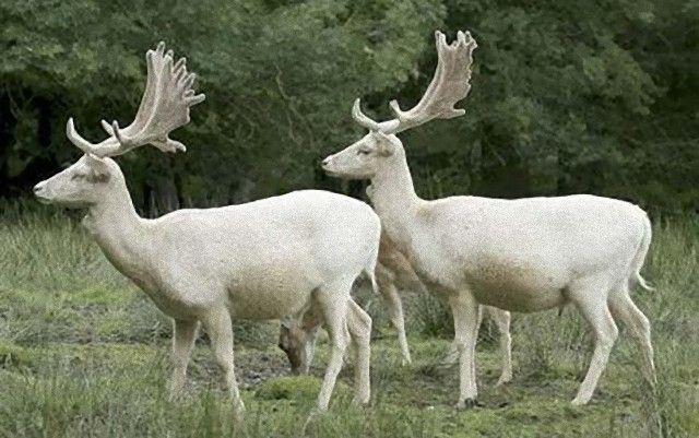 deer-460_1211985c_e