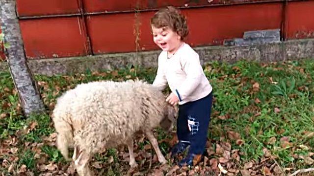 sheepnboy2