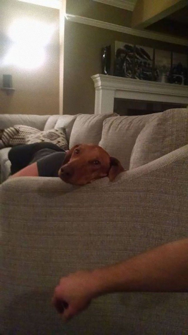 perfectly-timed-photos-dogs-22_e