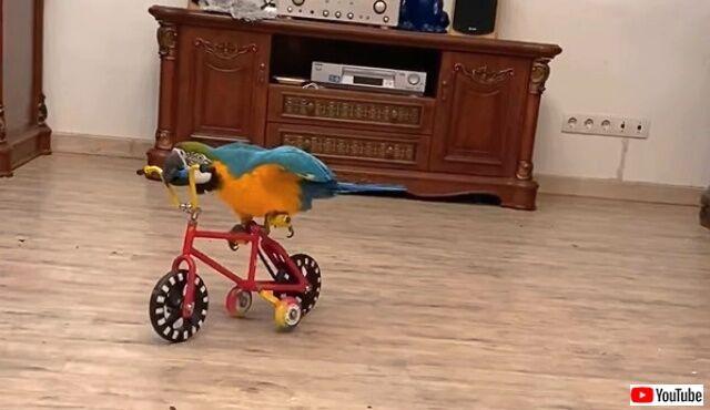 birdie3_640