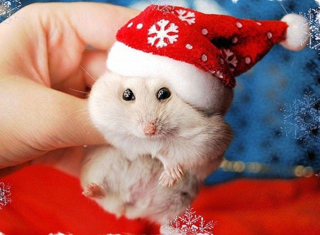 Funny-Christmas-animals25_e