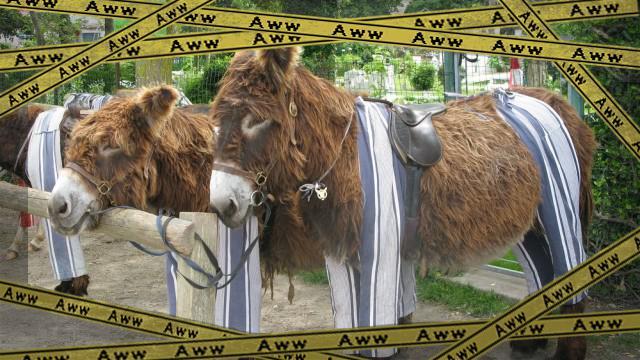 donkeys-1_e-frame