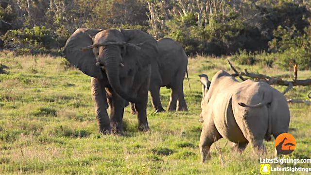 elephantnrhino4