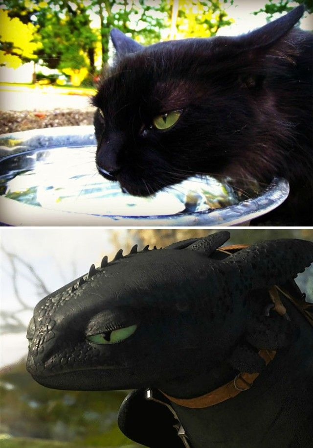 cats-toothless-lookalikes-32-57cec16fa77a4__700_e