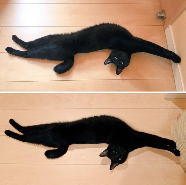 cat-2 [www.imagesplitter.net] (1)