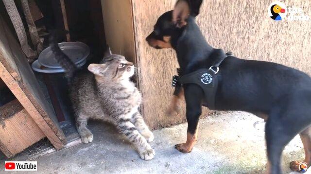 puppyadoptkitten2_640