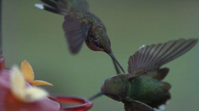 slowmobirds13_e
