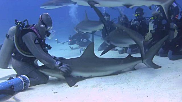 dolphinshark4