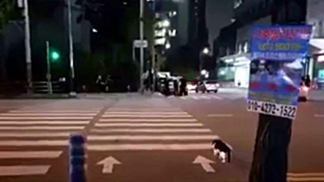 crossingcat2