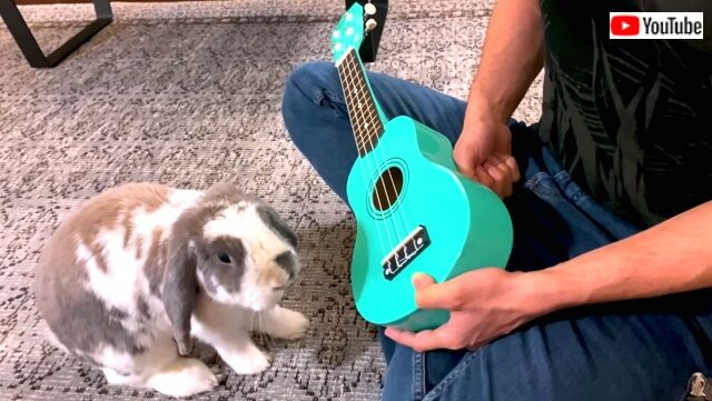 rabbitplaysguitar1_640