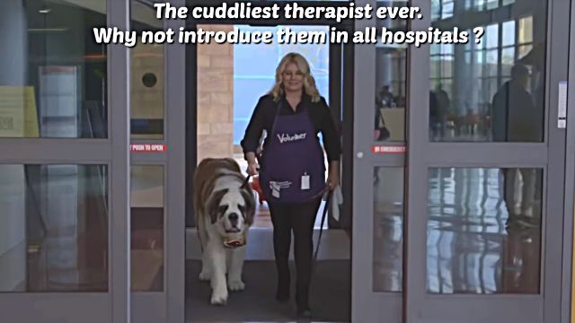 therapydog4