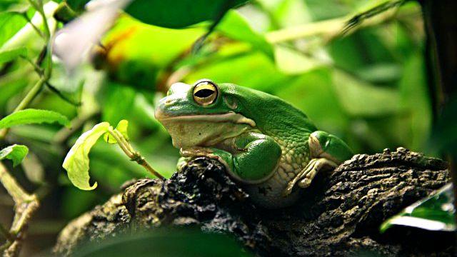 frog-663966_960_720_ea