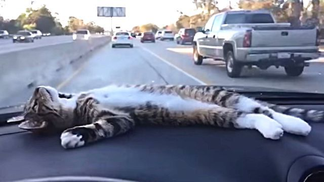 dashboardcat3