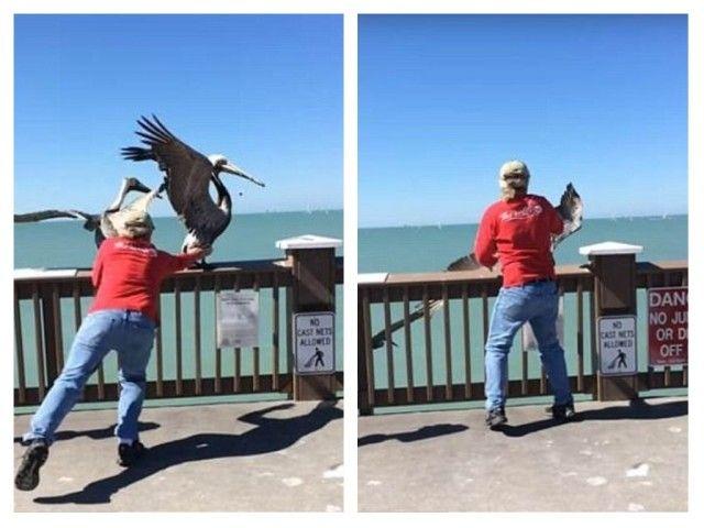 pelican2_e